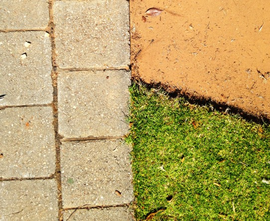 abstracted lawn 2