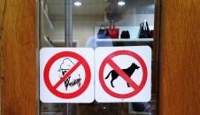 no icecream or dogs